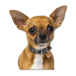 Cute Doggie Heat Transfer Vinyl