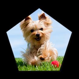 Running Lovely Dog Digital Transferred Vinyl