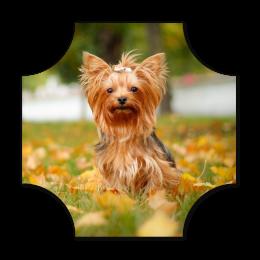 Cute Papillon Dog Fullcolor Digital Vinyl