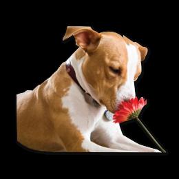 Lovely Dog Smelling the Flower Color Printable Transfer