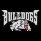 Clear Stone Bulldog Iron on Transfer Design